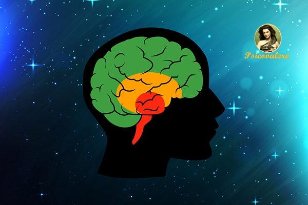Psicovalero Carl Jung y el Cerebro Triuno - Frank Valero