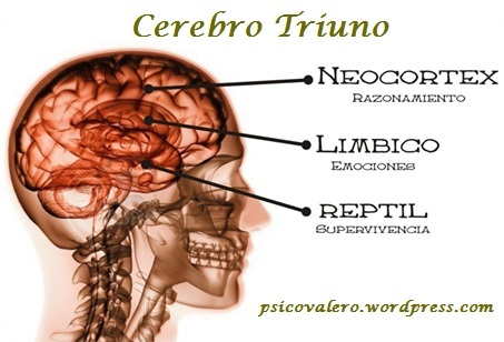 psicovalero cerebro triuno